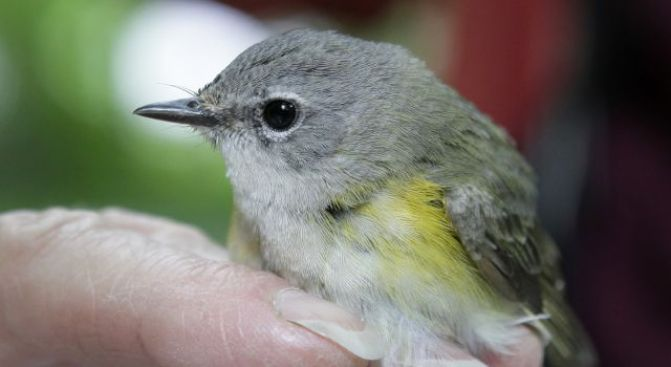City Din Forces Birds To Shout, Study Says