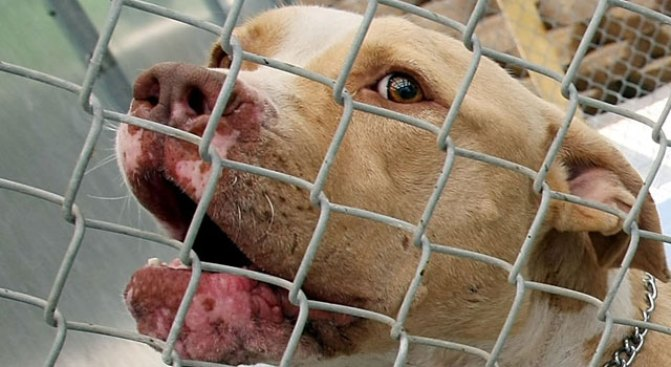 Woman Sentenced for Role in Dogfighting Ring