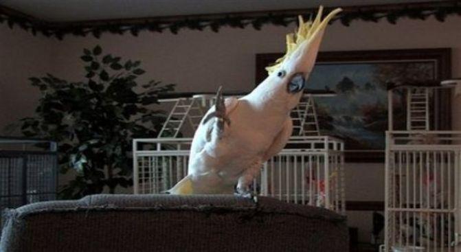 Go 'Head Birdie, Get Your Eagle On