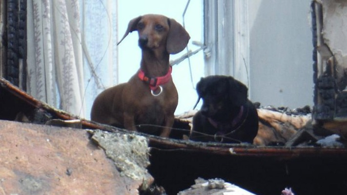 Dogs Found Alive After House Fire
