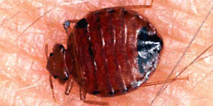 """Dirty"" Dorms Left Us With Bedbugs: Students"