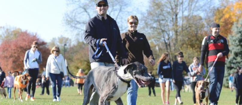 Bark at the Park: Run And/Or Adopt a Pet