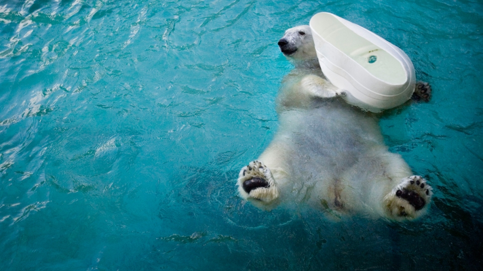 Philly Zoo's Coldilocks, Nation's Oldest Polar Bear, Celebrates Milestone Birthday
