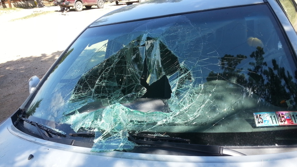 Retired Pennsylvania Teacher Laughs After Black Bear Destroys Car's Windshield