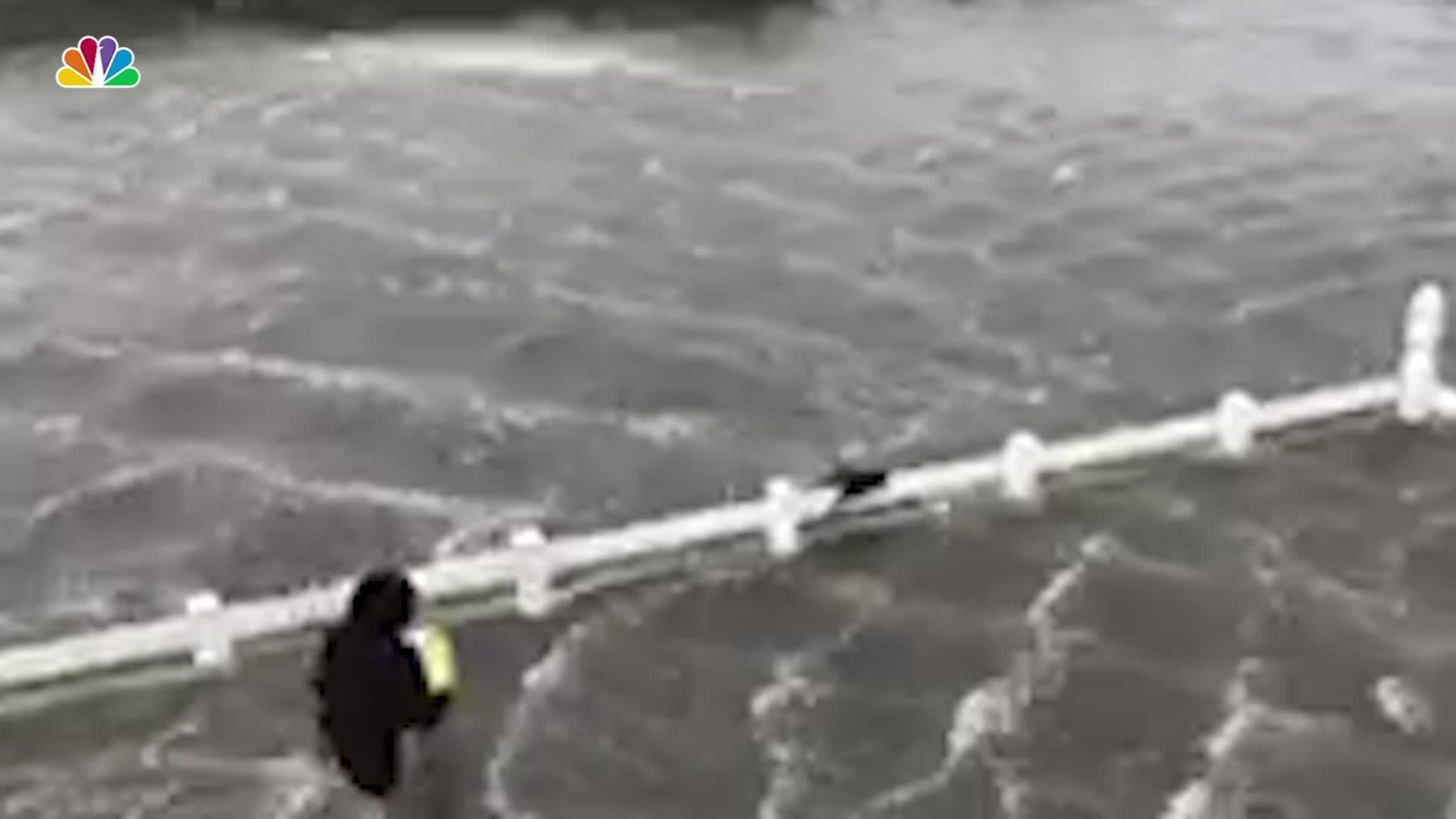 Woman Rescues Cat in Dorian's Floodwaters